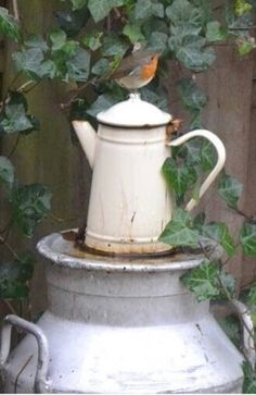 Old coffee pot in the garden.