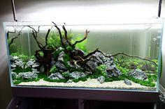 Wood+rock aquascape idea