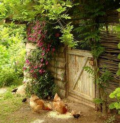 beautiful chicken shack