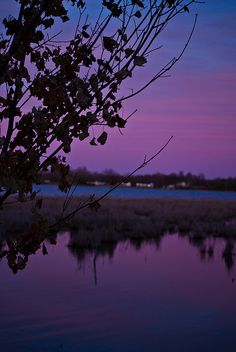 Dusk on Bellamy Lake