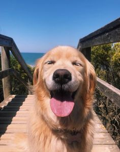 dexterguernon - 0 results for golden retriever Cute Little Animals, Cute Funny Animals, Cute Dog Wallpaper, Golden Wallpaper, Cute Dogs And Puppies, Doggies, Chihuahua Dogs, Pet Dogs, Retriever Puppy