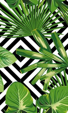BAIIA is Australian Swimwear for the Woman of Tomorrow. We're a leading eco friendly label creating sustainable bikinis & reversible swimsuits from recycled plastic materials. Palm Leaf Wallpaper, Summer Wallpaper, Cute Wallpapers, Wallpaper Backgrounds, Iphone Wallpaper, Tropical Pattern, Diy Arts And Crafts, Tropical Leaves, Painting Patterns