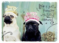 Pugs wish you a happy birthday