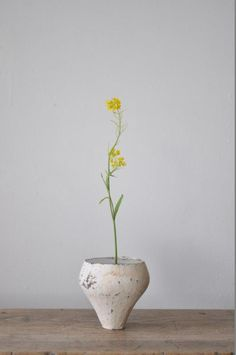 二階堂明弘さん × 菜の花