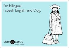 Funny jokes about dogs. Ecard about dogs. I'm bilingual. I speak English and dog. Quotes about dogs. I Love Dogs, Puppy Love, Cute Dogs, Springer Spaniel, Pugs, Dachshunds, Crazy Dog Lady, Dog Rules, Dogs And Puppies