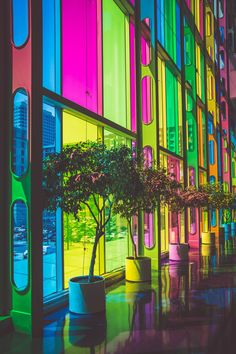 Multicolored rainbow glass windows with potted trees in front in urban street Colorful Pictures, Free Pictures, Free Images, Color Splash, Luz Solar, Rainbow Glass, Potted Trees, Design Graphique, Colorful Wallpaper