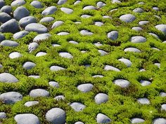 Moss garden | Kyoto Moss Garden | Flickr - Photo Sharing!
