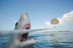 Things to do in Key West: 'Get High Parasailing Tours' better then the first time I went!!!