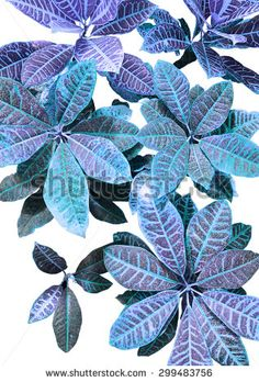 Tropical leaves print - stock photo