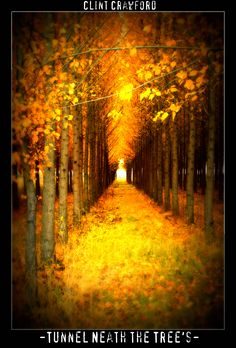 Tunnel neath the Tree's