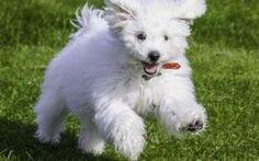 Tutto quello che ti serve sapere sugli accessori per il tuo cane #cuccia #accessori #per #cani #guinzagli