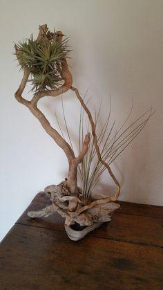 Décoration bois flotté esprit nature avec végetal tillandsia