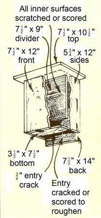 Beginner Gardening Bat House Diagram 1 - North American bats polish off hordes of mosquitoes every night. Support their efforts by providing a bat house based on this advice from Bat Conservation International. Build A Bat House, Bat House Plans, Bird House Kits, House Building, Bat Box, How To Build Abs, Homemade Bird Houses, Home Greenhouse, Greenhouse Wedding