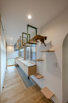 Diy Cat Tower, Cat Wall Furniture, Cat Gym, Bunny Room, Cool Cat Trees, Living With Cats, Cat Towers, Cat Shelves, Cat Playground