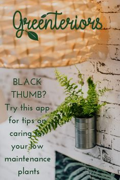 Nourish your knowledge! Say goodbye to your black thumb! We've made caring for plants simple and fun Indoor Palm Trees, Indoor Plants Low Light, Gardening For Beginners, Gardening Tips, Cat Friendly Plants, Low Maintenance Indoor Plants, Bathroom Plants, Hanging Plants, Low Lights