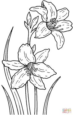 narciso flor desenho - Pesquisa Google