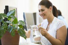 È dimostrato scientificamente. Le piante da ufficio migliorano la produttività, l'umore e purificano l'aria. Quali scegliere e come prendersene cura.