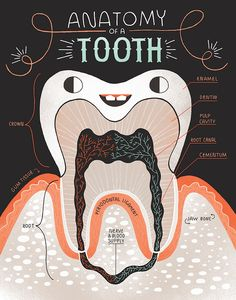 These little teeth sure are cute! Get two posters in this special deal. A healthy and unhealthy tooth. A cute way for kids to learn while they brush their teeth and a great gift for your favorite dentist. ART WORK STATS: • paper size: available in three sizes: 8 in X 10 in and 11 in x 14 in art prints or 18 in x 24 in poster. • printed on Aurora Fine Art Natural (100% cotton rag, acid-free, matte) • printed with Epson archival pigment inks •18 in x 24 in are shipped separately via printful…