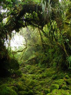 la jungle intouchee | 30.12.2010, Piton des Neiges | Alexander Pohl | Flickr