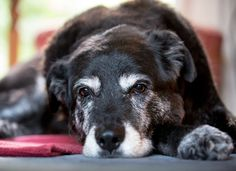 5 Signs Your Dog is Stressed (and How to Relieve it) | petMD | petMD