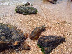 Praia das Conchas - Itanhaém - SP- BRAZIL
