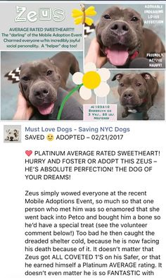 SAFE ❤️❤️ 2/20/17 THANK YOU❤️ PLEASE TAKE GOOD CARE OF HIM AND LOVE HIM FOREVER❤️❤️/ij Brooklyn Center My name is ZEUS. My Animal ID # is A1103610. I am a neutered male blue and white american staff mix. The shelter thinks I am about 5 YEARS old. I came in the shelter as a STRAY on 02/13/2017 from NY 11210, owner surrender reason stated was STRAY. http://nycdogs.urgentpodr.org/zeus-a1103610/#