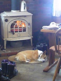 Animals love a nice warm wood burning stove or fireplace.