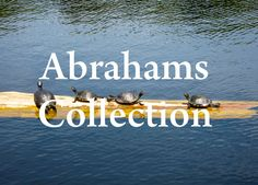 Turtles Photography by AbrahamsCollection on Etsy, $5.00