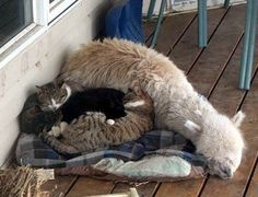 How about catS snuggling with a baby Tina??!