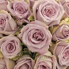 Find antique lavender roses at wholesale prices! Silverstone Antique Lavender Rose is a show stopper with the softest touch of pink on an antique lavender rose. This rose would be perfectly paired with our Antique Lavender Spray Roses for a romantic monochromatic bouquet or centerpiece. Offered in...