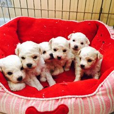 Rosa with all of her siblings. Rosa is second from the right and the smallest. (The one who is looking at the camera) Plastic Laundry Basket, Siblings, Animals, Pink, Animaux, Animal, Animales, Animais