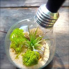 How to Plant a Terrarium | we have all seen these light bulb terrariums but your window of ...