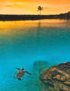 Sea Turtle Sunset at Kiholo Bay, Big Island, Hawaii