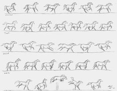 Different stages of horse movements. This is gonna help me when i draw horses. Movement Drawing, Gesture Drawing, Drawing Art, Horse Drawings, Animal Drawings, Horse Drawing Tutorial, Animal Movement, Horse Sketch, Horse Anatomy