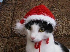 piggy hats to crochet for small dogs | hat red christmas santa claus pet hat for dogs and cats ding front ...