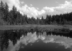 Nature Mirrored by Brian Chase