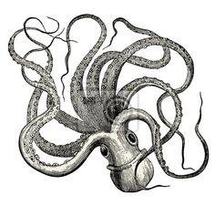 Sticker Pieuvre (Octopus vulgaris)