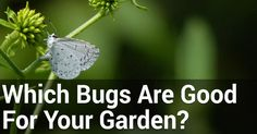 In order to have an astounding garden, it's necessary to monitor the presence of certain pests in it. They can make a big difference when it comes to how much your garden will thrive.