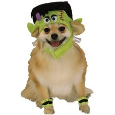 Frankenstein Dog Costume ** You can get more details by clicking on the image.  sc 1 st  Pinterest & dr. seuss dog costume | Sturdy Boy | Pinterest | Dog Pet costumes ...