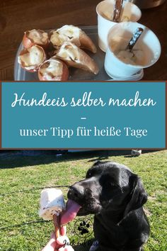 Hundeeis selber machen – unser Tipp für heiße Tage Homemade dog ice is a great way to cool and keep your dog busy in summer. Read here how you can make dog ice yourself. Pet Dogs, Dog Cat, Pets, Super Rich Kids, Dog Ice Cream, Clarissa, Rich Kids Of Instagram, Icing Recipe, Forest Animals