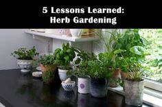 ( Witty commentary. Good info. Link to find out about specific herb plants and their needs. ASW) 5 Lesson Learned About Herb Gardening
