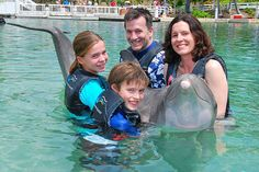 Swim with Dolphins in Hawaii - Travel Savvy Mom Dolphin Encounters, Work With Animals, Beach Vacations, Worldwide Travel, Big Island, Hawaii Travel, Dolphins, Family Travel, Surfing
