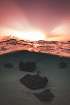 elvenlake:      Underwater Seascapes  (Source: un.org, via heaven-ly-mind)