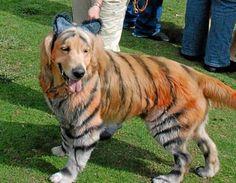 Animals get wild at doggy Halloween parties