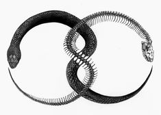 aviculalunae: The Ouroboros, Greek for 'tail swallower' is depicted as a snake in circular motion swallowing it's tail - on occasion, it can be seen in a lemniscate shape (as seen above). It originated in Egypt to symbolize the sun; in terms of Gnostic beliefs, it is a referral to the solar god Abraxas, signifying infinity and the soul of the earth.