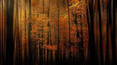 Autumn's Mysterium by Rob Hansen. Smithsonian Photo