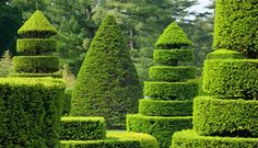Topiary Garden at Longwood Gardens by Lovelylovely Topiary Garden, Lush Garden, Dream Garden, Garden Art, Garden Design, Topiary Trees, Gardens Of The World, Longwood Gardens, Italian Garden