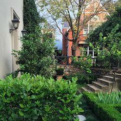 Autumn #autumn#garden#gardener#gardens#gardenglory#gardening#organic#grow#gardentags#gardensofinstagram#hedges#formal #citrus @lukesgarden