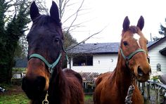 New arrivals Douggie and Whisper looking forward to some necessary TLC.
