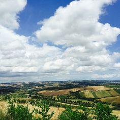 Foiano della chiana Vineyard, Travel, Outdoor, Italia, Voyage, Outdoors, Viajes, Traveling, Outdoor Games
